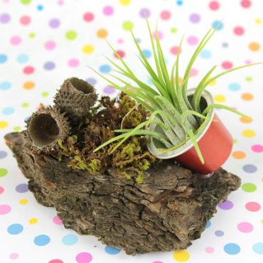 Diy Woodland Espresso Cup Airplant Planter!